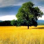 Лето, природа, дерево