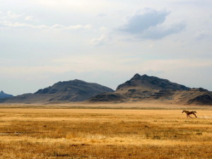 Nature_Mountains_Wild_West_015008_29